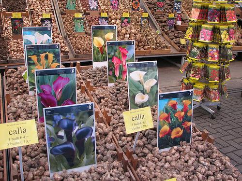 Mercado de las Flores de Amsterdam