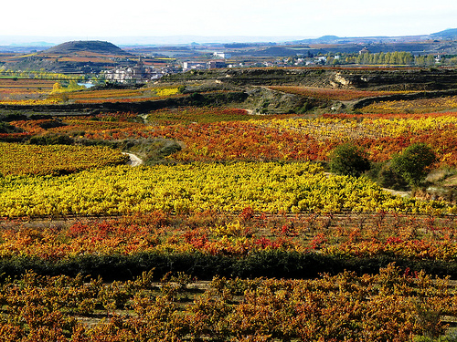 Viñedos, Briñas, La Rioja
