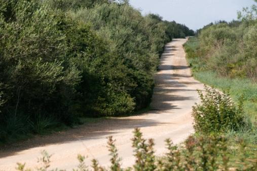 Camino del Cid