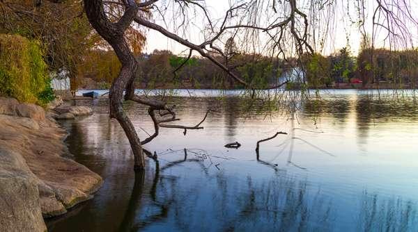 Lago en el Zoo de Johannesburgo