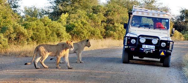 leones-kruger-quehoteles