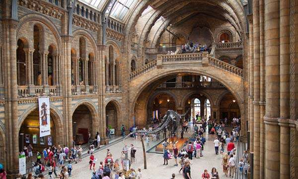 museo-historia-natural-londres-quehoteles