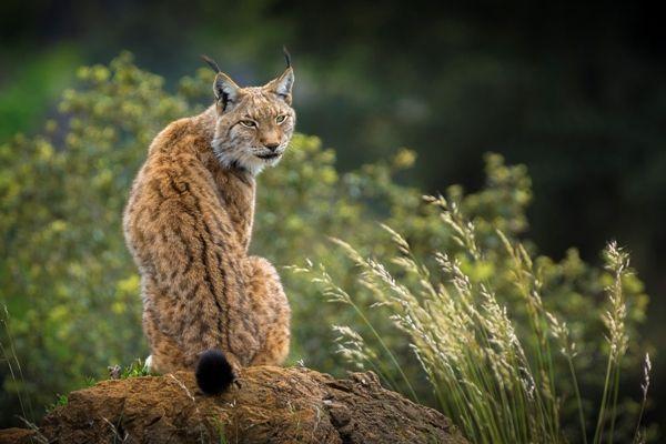 Los mejores zoos de España