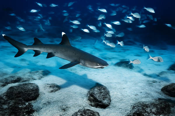 Fondo marino en Islas Galapagos